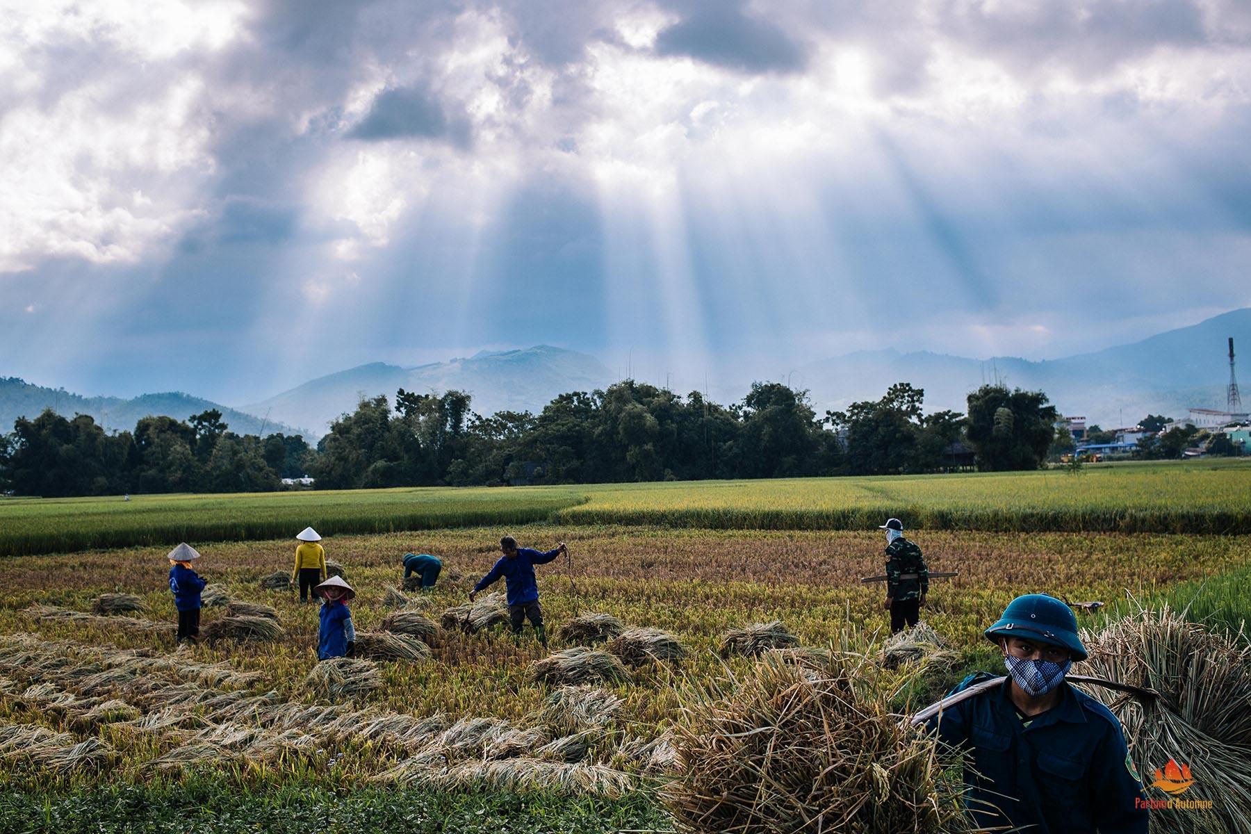 Travail dans les champs à Nghia Lo, Vietnam