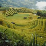 Rizières en terrasse dans le district de Hoang Su Phi, Province de Ha Giang, Vietnam