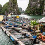 Village de Pêcheurs dans la Baie d'Halong, Vietnam