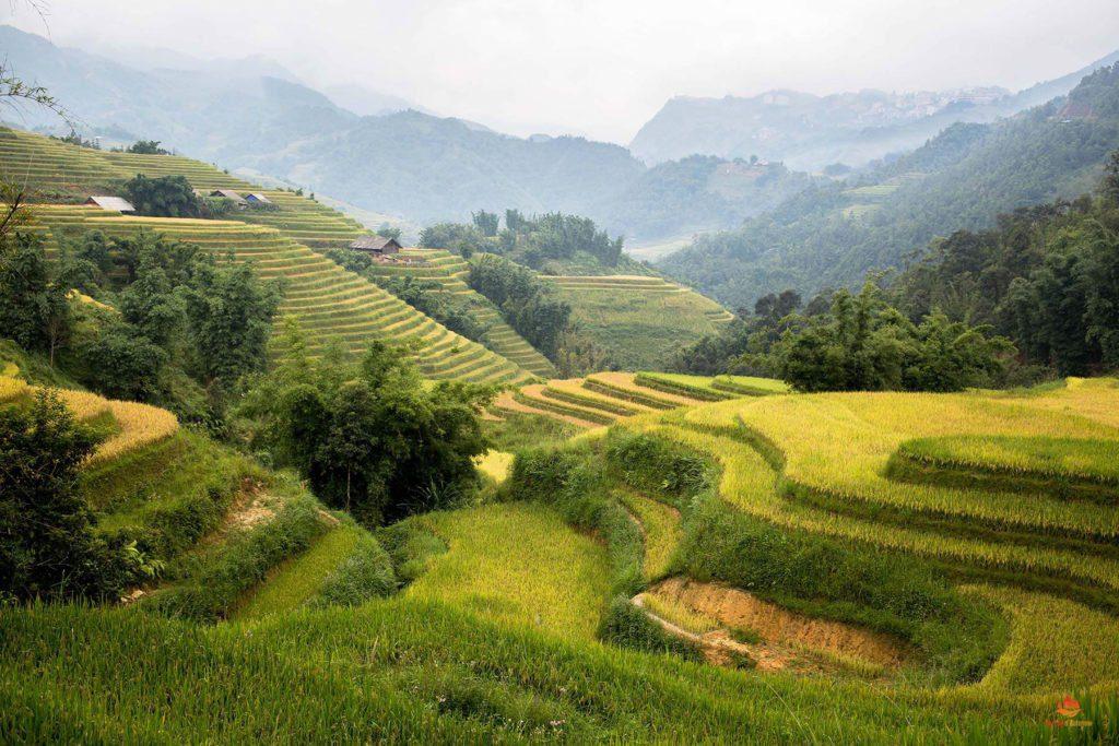 Rizières en terrasse dans les environs de Sapa, Vietnam